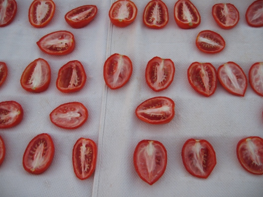 sun_drying_tomatoes_day_1