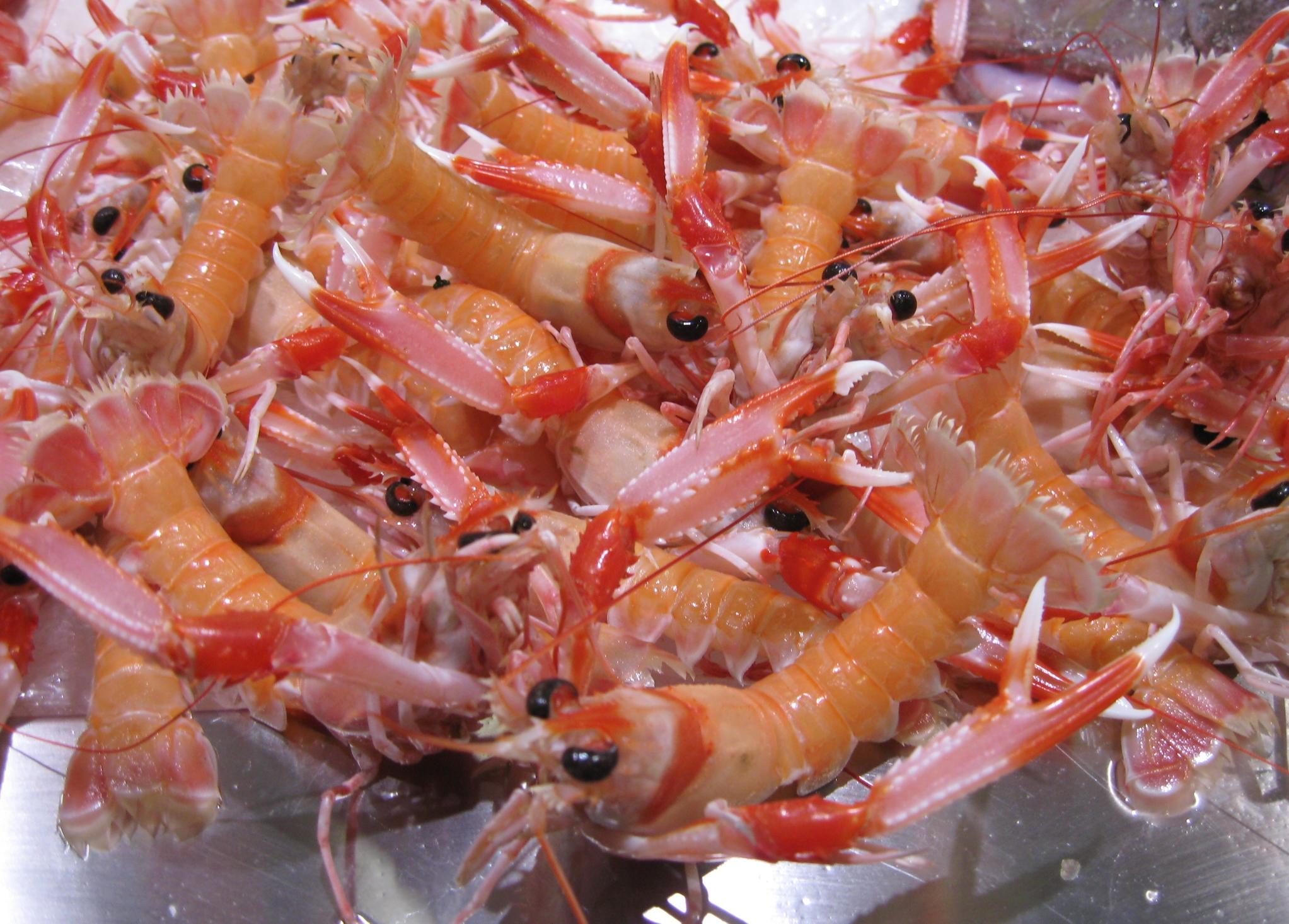 crayfish_langostinos