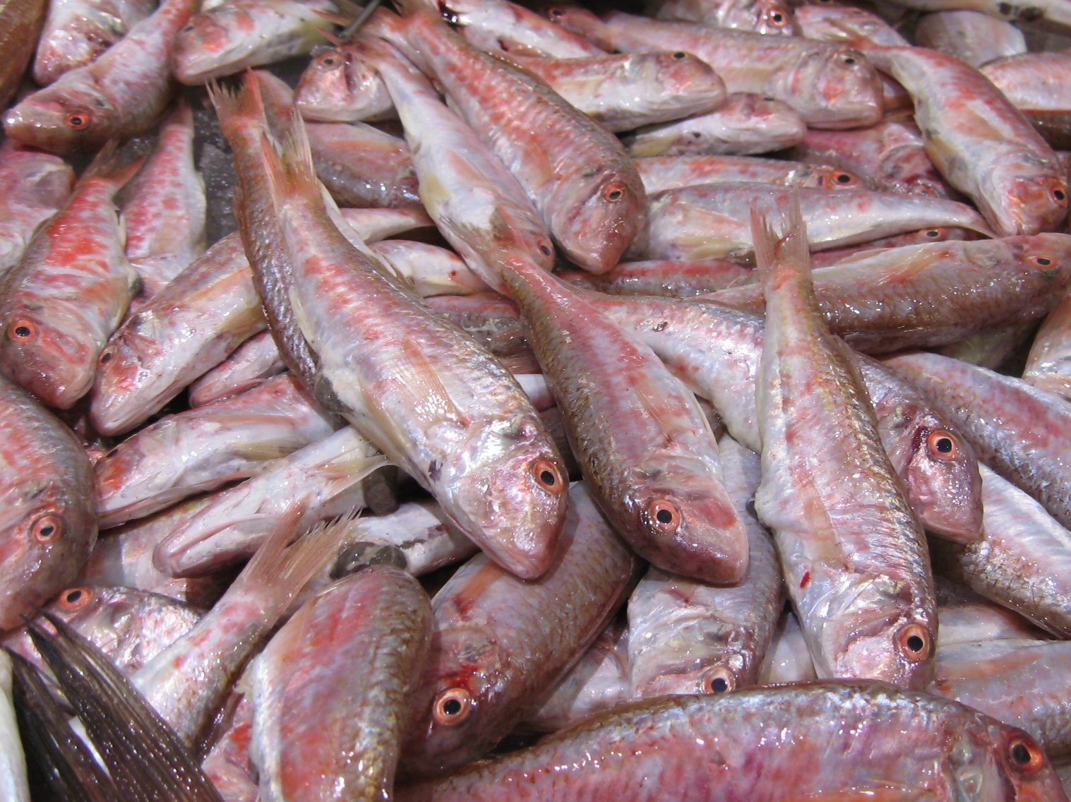 red_mullet_salmonetes