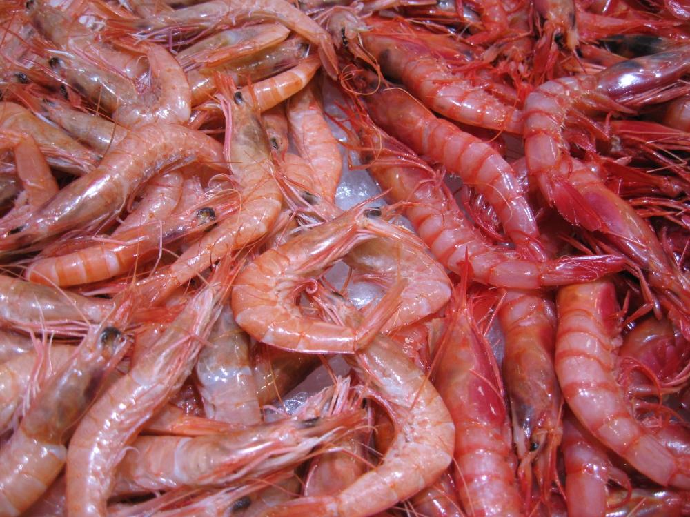 Almeria Fish Market (6/6)