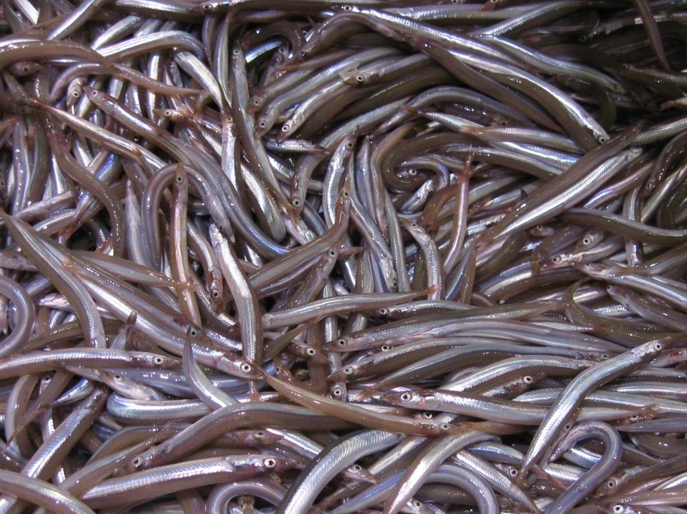 Almeria Fish Market (2/6)